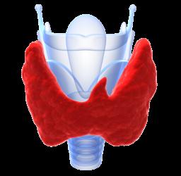 Study calls for more thyroid disease screening   مطالعات توصیه به غربالگری بیشتر بیماریهای تیرویید میکنند